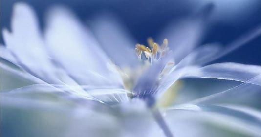 fiore petali